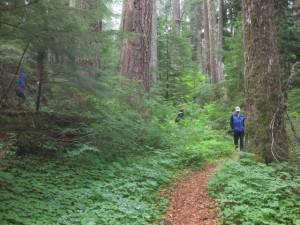 Wilderness-Hike